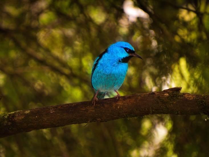 Pájaro azul sobre una rama